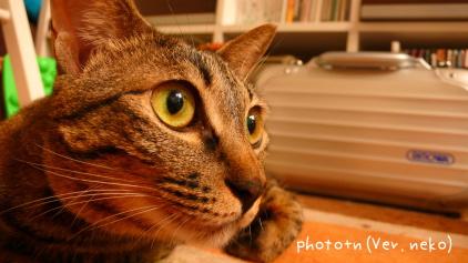 200708092_marked.jpg